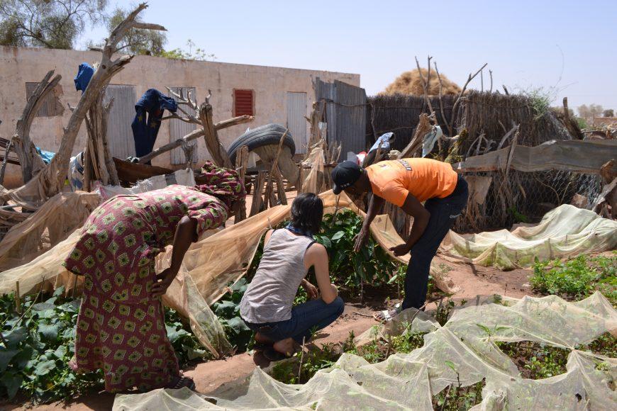 ACTED Sénégal