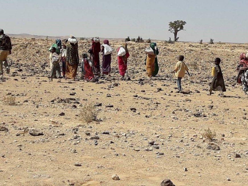 ACTED Somalia