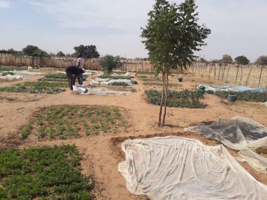 Les plants du jardin de maraîchage du GPF de Gassé Safalbé