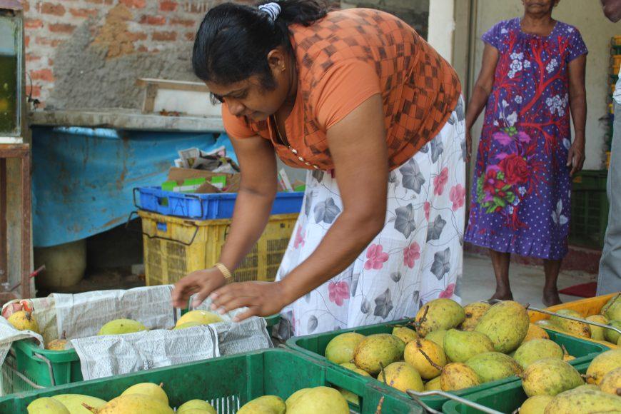 Sri lanka small businesses